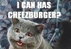 I Can Haz Meme Generator - i can haz meme generator i can has blanket i can haz meme 28