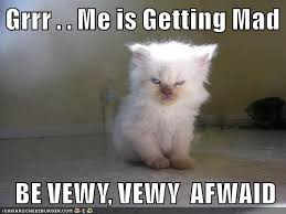 Mad Cat Memes - lolcats mad lol at funny cat memes funny cat pictures with