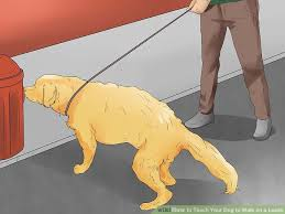 Bench Dog Cookies How To Teach Your Dog To Walk On A Leash 12 Steps With Pictures
