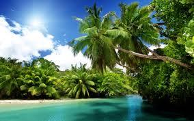 palm trees beach wallpaper