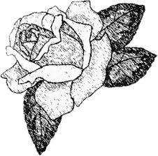 drawings of roses made easy with your first sketch drawings of