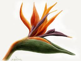 bird of paradise flower madewithpaper bird of paradise fl flickr
