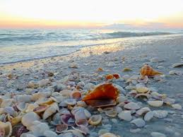 Lighthouse For The Blind Palm Beach Shell Collector U0027s Paradise Sanibel Island Florida At The