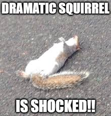 Dramatic Squirrel Meme - dramatic imgflip