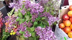 flowers san francisco bi rite market sustainably grown flowers