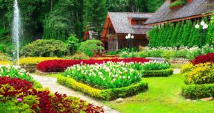 Flower Companies Landscaping Companies 5 Beautiful Flowers For Your Garden