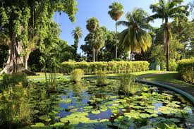 Slo Botanical Garden by Three Memorable Experiences On St Vincent And The Grenadines