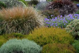 native plants massachusetts coastal gardening how to garden on the seacoast north coast
