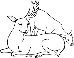 fawn coloring pages fabulous find this pin and more on tinkerbell
