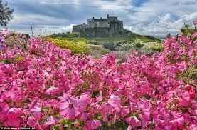 lindisfarne castle grounds burst into colour in a desolate