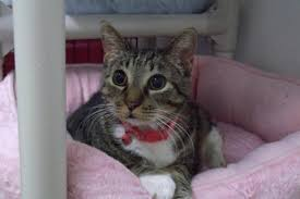 Blind Cat Sanctuary Blind Cat Rescue Is A Life Time Care Sanctuary For Blind Fiv