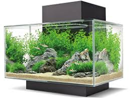 Fluval Edge Aquascape Edge Lifestyle Home Aquariums Fluval