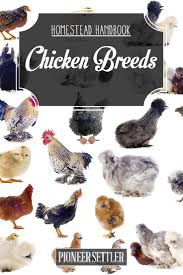 raising backyard chickens chicken breeds