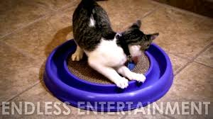 Cat Scratcher Replacement Pads Turbo Scratcher Cat Toy Youtube