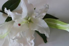 casablanca lilies white real touch casablanca stems the silk flower company