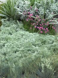 garden design garden design with how to care for fuchsia plants