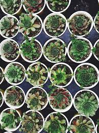 walled garden designs ideas for your garden abc brick sales