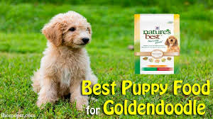 goldendoodle puppy treats best puppy food for goldendoodle top 5 reviews
