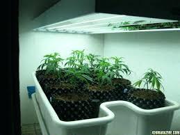 t5 grow light bulbs amazing t5 grow lights home depot and home lighting fluorescent grow