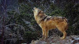 Montana wildlife tours images Animals of montana inc tours jpg