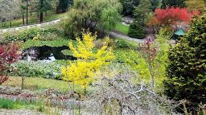Mt Lofty Botanic Gardens Mt Lofty Botanic Gardens Picture Of Adelaide Discovery Tours
