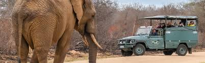 african safari car african safari adventures u2013 for tours safaris transfers u0026 activities