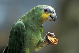 Parrot Decorations Home Large Parrots That Can Talk