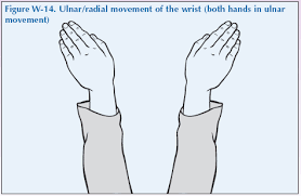 Which Cell Helps In Movement Of Bones The Wrist U0026 Hand Global Alliance For Musculoskeletal Health
