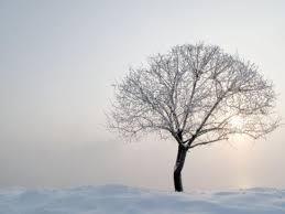 of rimed trees in ne china s daily