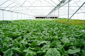revealing 5 interesting facts about hydroponic systems