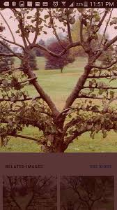 cool trees cool trees ourfigs com