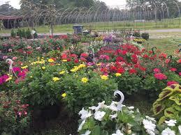 Flower Shops In Suffolk Va - johnson u0027s gardens inc home facebook