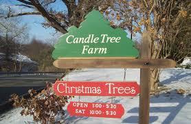 candle tree farm