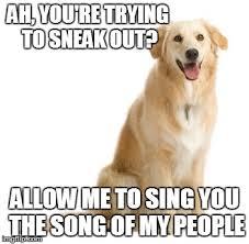 Annoyed Dog Meme - every time imgflip