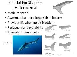 fish morphology powerpoint