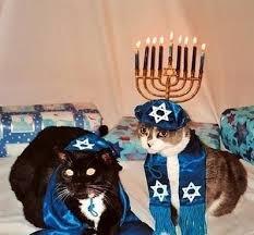 cat menorah 32 best hanukkah cats images on cats kittens and kitten