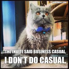 Internet Meme Cat - modern cat memes modern cat