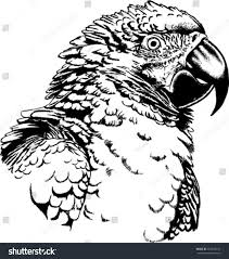 black white vector sketch macaw parrot stock vector 167233163