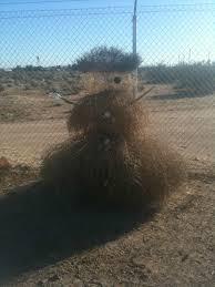 the tumbleweed u201csnowman u201d buzzhunt co uk