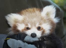 the cutest animals of 2015 photos abc news