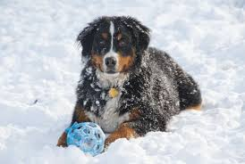 Choose The Simple But Elegant The Simple Way To Protect Your Dog From Dangerous Rock Salt