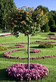 flowering trees for small gardens smaller shade tree flowering