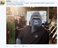Pawn Shop Meme - i am harambe and this is my pawn shop harambe the gorilla know