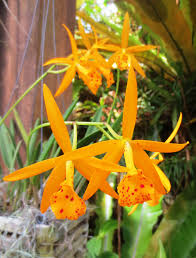 Orchids Facts by Scintillating Tidbits About Orchids Eat Breathe Garden Diy