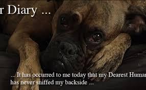 boxer dog feet sad dog diary
