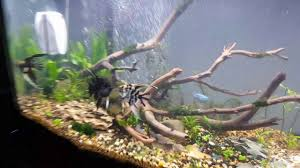 ada style aquarium design a new fish addicts tank design