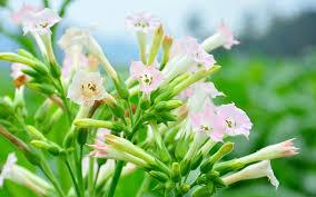 11 gorgeous plants for shady borders garden club