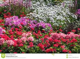 flowers ornamental garden bed stock photos image 22573313