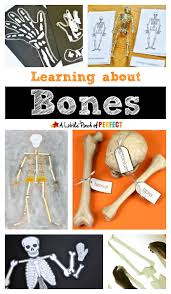 learning about bones fun hands on activities for kids