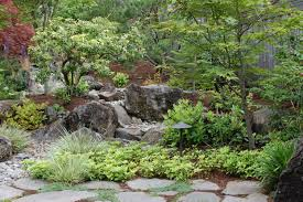 breathtaking privacy trees for small backyards pictures ideas